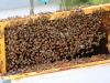 Ambiente: inaugurata casa delle api a Riccione