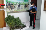 Una serra di cannabis in casa, arrestato a Sortino