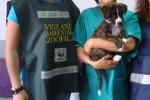 """A Caltanissetta mancano i microchip per registrare i cani, l'esposto del Wwf: """"Situazione grave"""""""