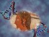 Ricostruito il Dna degli Etruschi (fonti: in primo piano particolare di un affresco etrusco del 510 a.C, diDave & Margie Hill/Kleerup; sullo sfondo la doppia elica del Dna, di Christoph Bock, Max Planck Institute