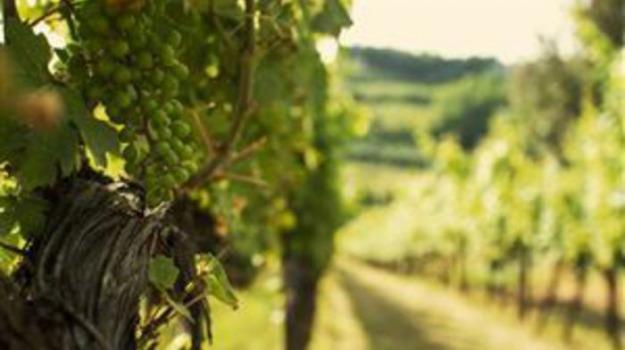 menfi, Vino, Agrigento, Economia