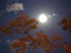 Lultima luna piena dellestate 2021 dà il benvenuto allautunno (fonte: Bill Abbott da Flickr)