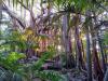 Le foreste tropicali rappresentano uno degli habitat più minacciati (fonte: R. Hamilton)
