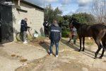 Bloccata corsa clandestina di cavalli sulla statale a Canicattini Bagni, 4 denunciati