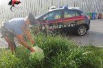 Augusta, nasconde un chilo di marijuana e sei panetti di hashish tra l'erba: arrestato