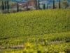 Vino: Nobile di Montepulciano, prima vendemmia per Pieve