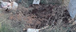 Palermo, l'inferno del cimitero dei Rotoli: i cinghiali invadono le tombe