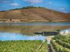 Vino: in Sicilia il primato del biologico e della sostenibilità