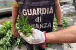 Latitante sorpreso ad irrigare una piantagione di canapa indiana: due arresti nel Catanese