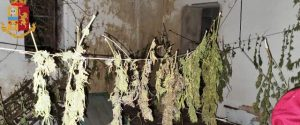 Lentini, 15enne coltiva e produce marijuana: arrestato