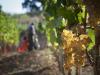 Vinitaly: crescita robusta post-Covid per vini e alcolici