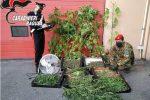 Nasconde 5 kg di marijuana tra le piante di pomodoro, nei guai un agricoltore di Vittoria