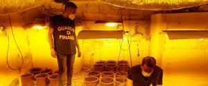 Palermo, serra di marijuana nello scantinato di un condominio: blitz con un arresto a Borgo Nuovo