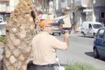 Licata, operai al lavoro per la potatura degli alberi