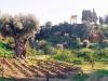 Valle dei Templi, festeggiati i primi 16 anni di apertura del giardino della Kolymbetra