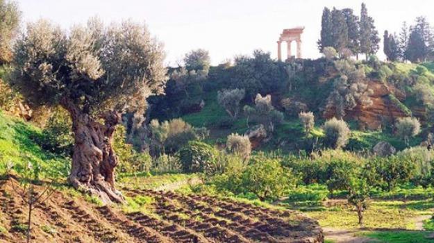 agrigento valle dei templi, Giardino della Kolymbetra, Parco Archeologico ad Agrigento, Agrigento, Cultura
