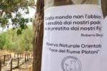Ambiente, monito di Benigni sui platani dell'Agrigentino