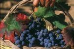 Sagra del vino, show e degustazioni a Montevago