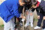 """Wwf, """"Pianta un albero"""" a Siculiana: giovani protagonisti"""