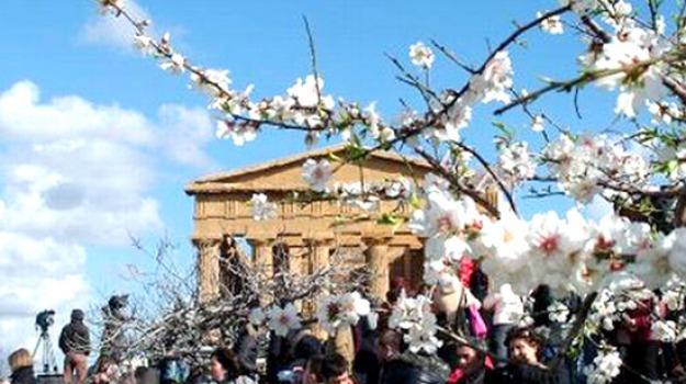 Mandorlo in fiore, Agrigento, Cultura