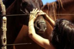 A Comitini il primo galà equestre
