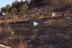 Sciacca, in fiamme il bosco di monte Cronio: le immagini