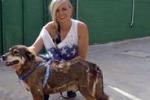 Sciacca, famiglia romana adotta un cane