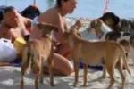 Sterilizzazione, al via un piano per tutti i cani di Lampedusa