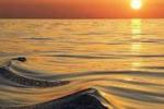 Arte & foto. Le ombre del mare viste da Palermo