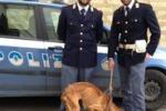 Niscemi, rischiava di morire impiccato: pittbull in salvo