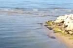 Petrolio in mare a Gela, aperta un'inchiesta