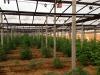 Sequestrata piantagione con 740 alberi di marijuana, due arrestati