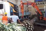 Volontari a Gela: piantata una palma nel centro storico