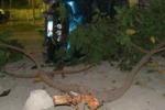 Drogato e ubriaco finisce su un albero: denunciato a Sommatino
