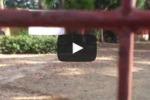 Gela, sito archeologico chiude per la presenza di cani randagi