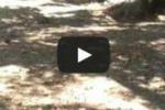 Giovani a rischio ripuliscono giardino a Gela