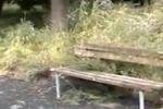 Erba alta e panchine rotte: nel degrado villa pubblica di Mascali