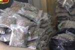 Catania, in casa con 280 chili di marijuana: le scene del blitz