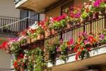 Colori e profumi di primavera, balconi in gara a Fiumefreddo