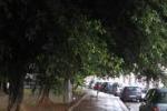 Cronache loro. Alberi da potare in via Pallavicino a Palermo