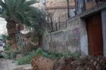 LA FOTO. Come muore una palma a Palermo