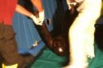 I 25 clandestini morti sul barcone: scatti da Lampedusa