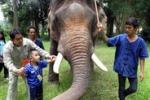 Thailandia, terapia con gli elefanti per i bimbi autistici