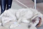 Abbandonato in un cassonetto, cane salvato dai vigili a Palermo