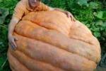 In Germania la zucca gigante