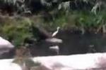 Aironi alla foce del fiume Oreto