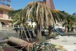 Taormina, la lotta al punteruolo rosso