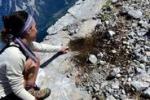 Impronte di dinosauro sulle Dolomiti