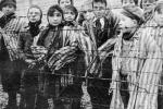 Giorno della Memoria, l'Ateneo di Palermo ricorda 5 docenti ebrei espulsi