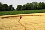 Cerchi nel grano in Friuli, torna la sindrome da ufo